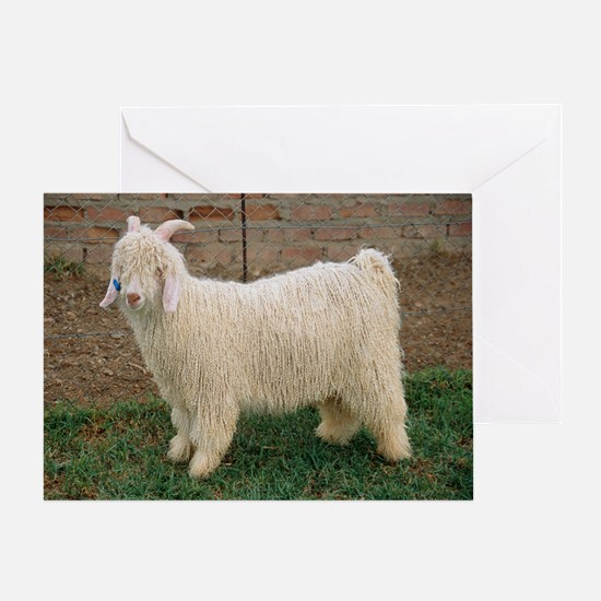 Angora goat - Greeting Card