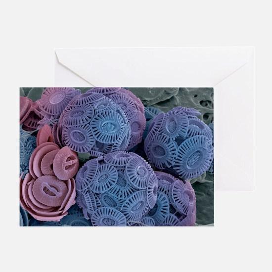 Calcareous phytoplankton, SEM - Greeting Card