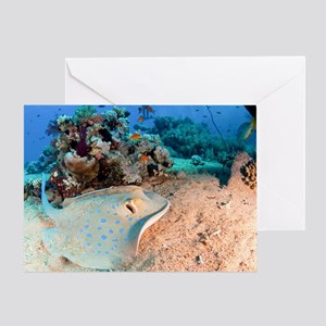 Blue-spotted stingray - Greeting Card