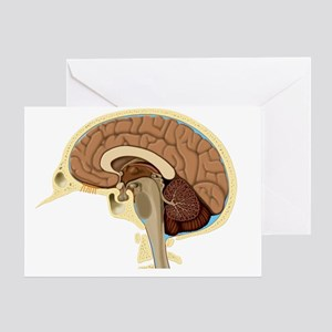 Human brain anatomy, artwork - Greeting Card