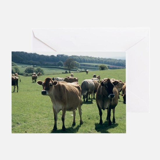 Jersey cows - Greeting Card