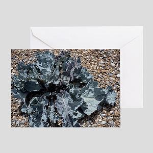 Sea kale plant (Crambe maritima) - Greeting Card