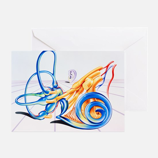 Artwork of inner ear - Greeting Card