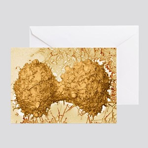 Mitosis, SEM - Greeting Card