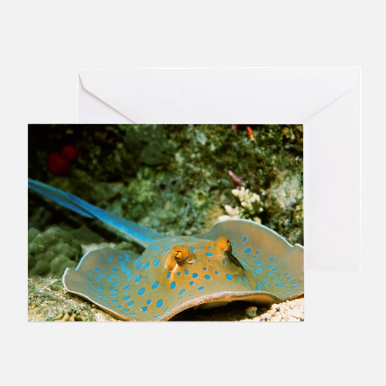 Blue-spotted fantail ray - Greeting Card