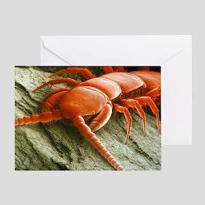 Garden centipede, SEM - Greeting Card