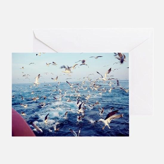 Seagulls - Greeting Card