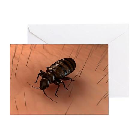 Bedbug, artwork - Greeting Card