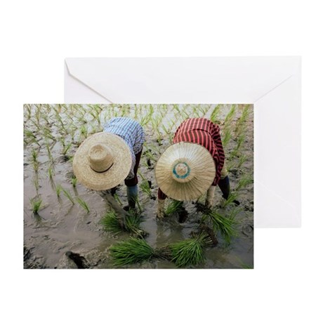 Rice farmers - Greeting Cards (Pk of 10)