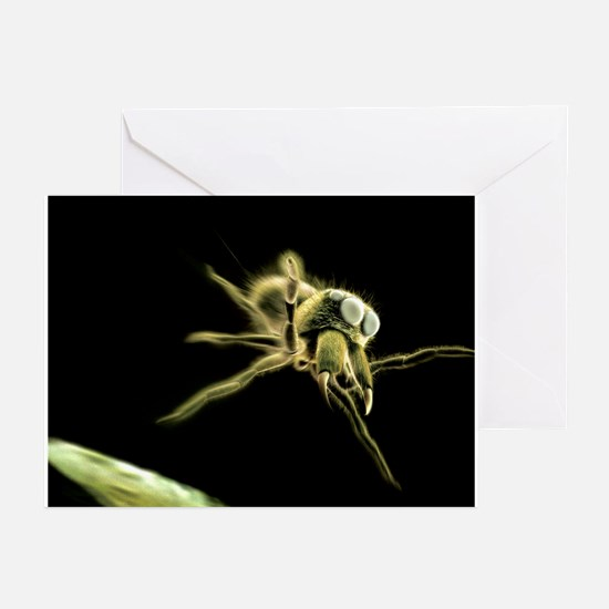 Jumping spider, computer artwork - Greeting Cards