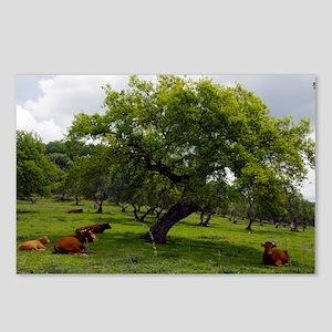 Cattle under a holm oak tree - Postcards (Pk of 8)