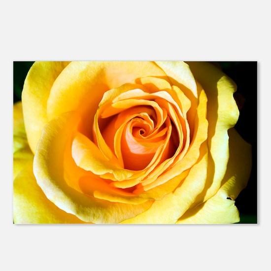 Hybrid tea rose (Rosa 'Just Joey') - Postcards (Pk