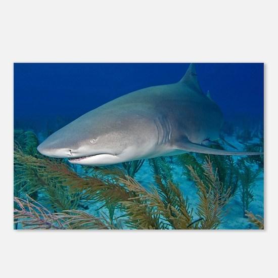 Lemon shark - Postcards (Pk of 8)
