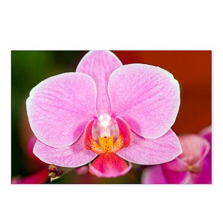 Orchid (Phalaenopsis sp.) - Postcards (Pk of 8)