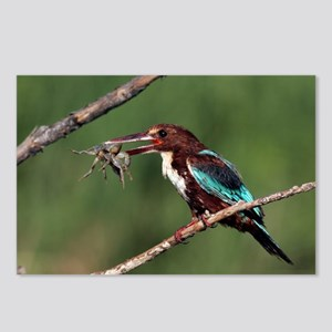 White-throated kingfisher - Postcards (Pk of 8)