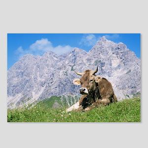 Cow - Postcards (Pk of 8)