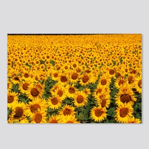 Field of sunflowers, France - Postcards (Pk of 8)