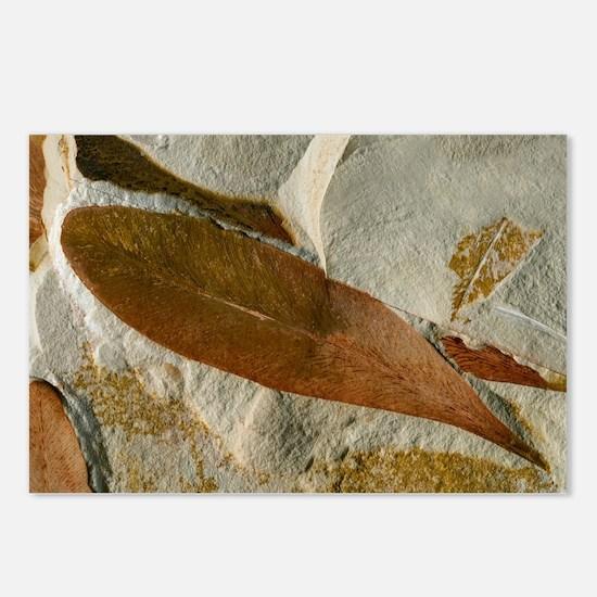 Glossopteris leaf fossils - Postcards (Pk of 8)