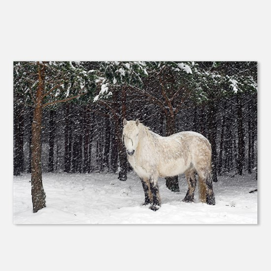 Highland pony - Postcards (Pk of 8)