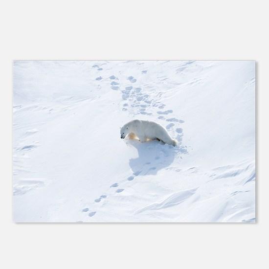Polar bear - Postcards (Pk of 8)