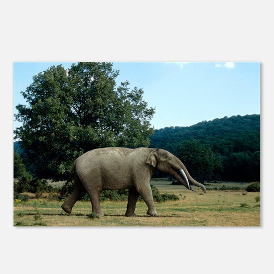 Prehistoric elephant, artwork - Postcards (Pk of 8