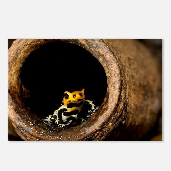 Poison arrow frog - Postcards (Pk of 8)