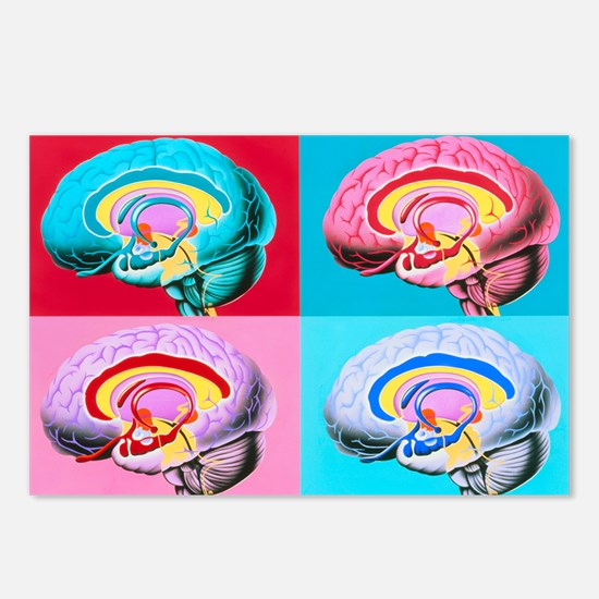 Artworks showing the limbic system of the brain -