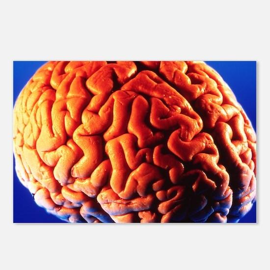 Human brain - Postcards (Pk of 8)