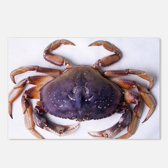 Dungeness crab - Postcards (Pk of 8)