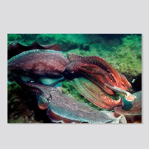 Giant cuttlefish - Postcards (Pk of 8)