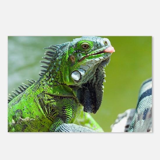 Green iguana - Postcards (Pk of 8)