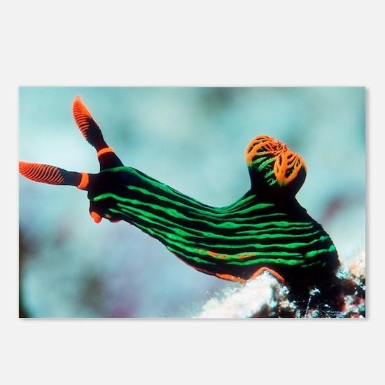 Nembrotha kubaryana sea slug - Postcards (Pk of 8)