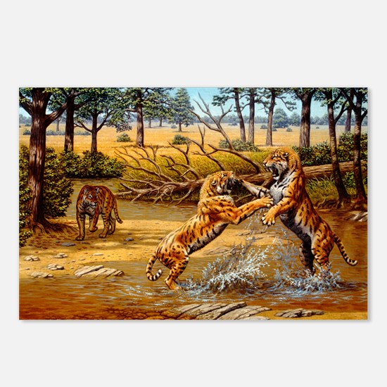 Sabre-toothed cats fighting - Postcards (Pk of 8)