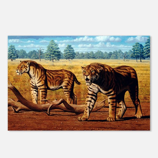 Sabre-toothed cats, artwork - Postcards (Pk of 8)