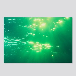 Sunlight underwater - Postcards (Pk of 8)