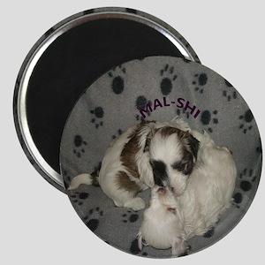 Mal-Shi puppy Magnet