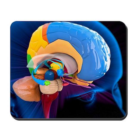 Human brain anatomy, artwork - Mousepad by sciencephotos