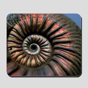 Ammonite fossil - Mousepad