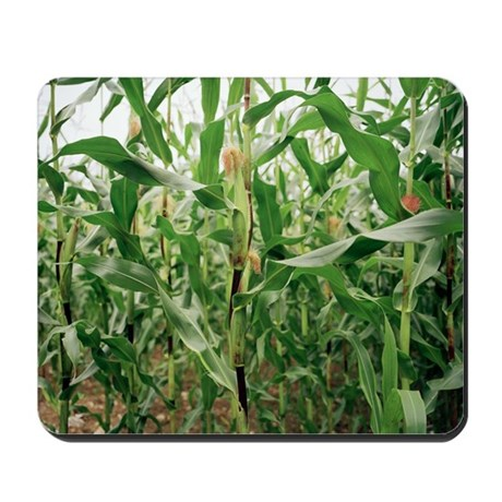 Maize crop - Mousepad