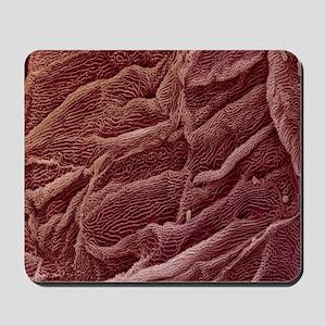 Oesophagus epithelium, SEM - Mousepad