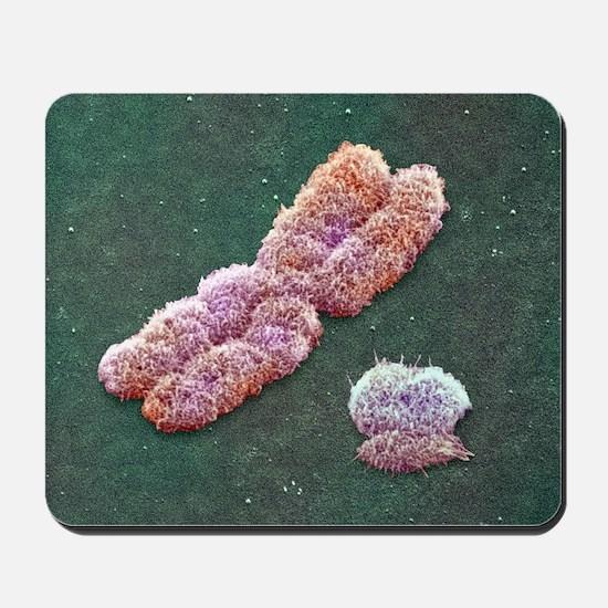 Male sex chromosomes, SEM - Mousepad
