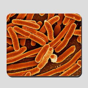 Escherichia coli bacteria, SEM - Mousepad