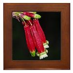 Flaming Firecracker Flowers Framed Tile