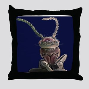Earwig, SEM - Throw Pillow