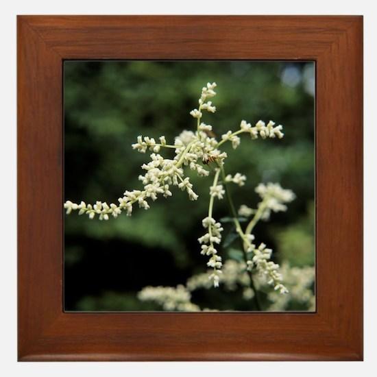 Artemisia flowers - Framed Tile