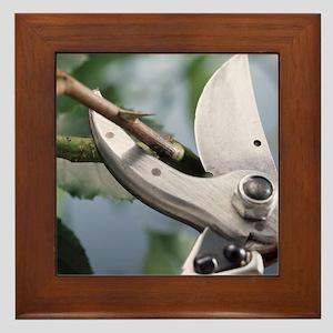 Pruning scissors - Framed Tile