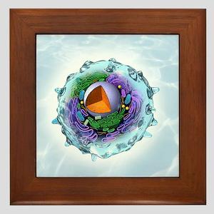 Animal cell structure, artwork - Framed Tile