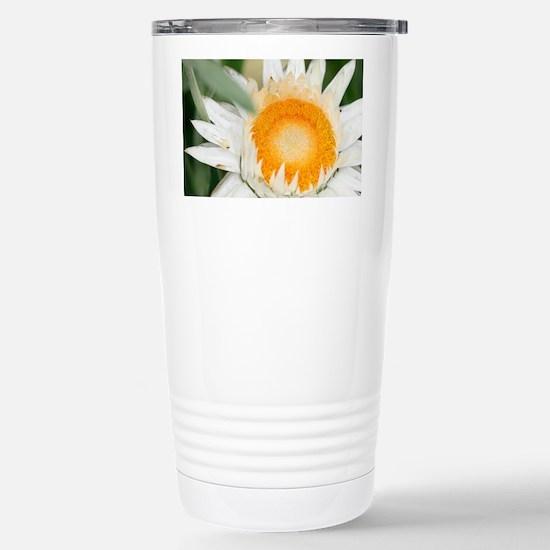 Everlasting flower - Stainless Steel Travel Mug