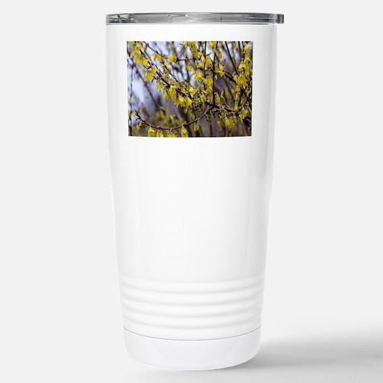 Forsythia 'Minigold' flowers - Stainless Steel Tra