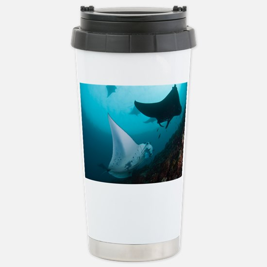 Manta rays - Stainless Steel Travel Mug